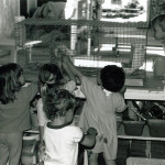 Children looking at an animal in a cage